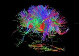 Mapping of the human brain has begun. The end results in mind control.