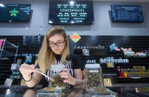 An employee laid out a display of manicured marijuana buds at the Pueblo West Starbuds dispensary