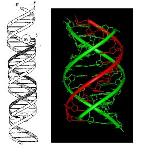 "Third strand DNA – introduction of programming to change human into ""other"""